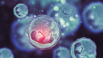 Sperm veya Yumurtaların Karışma Riski Var mı?