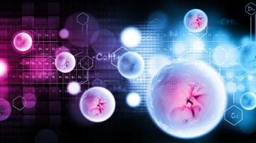 Embriyo Yapıştırıcı Nedir?